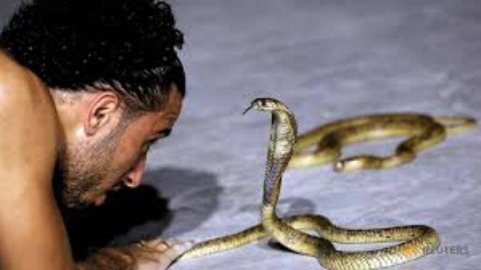 dresira zmije petface