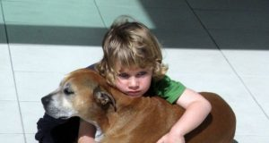 psi žive kraće petface