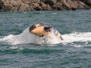 bolesna orka petface