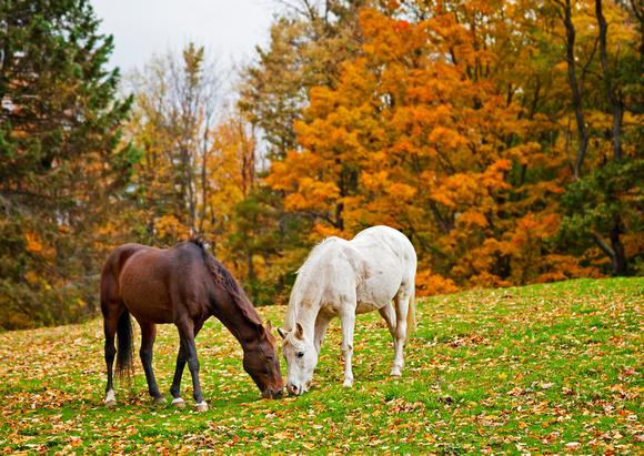 divljih konja petface
