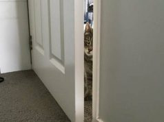 otvara vrata petface