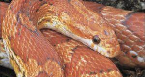 pet najpopularnijih zmija