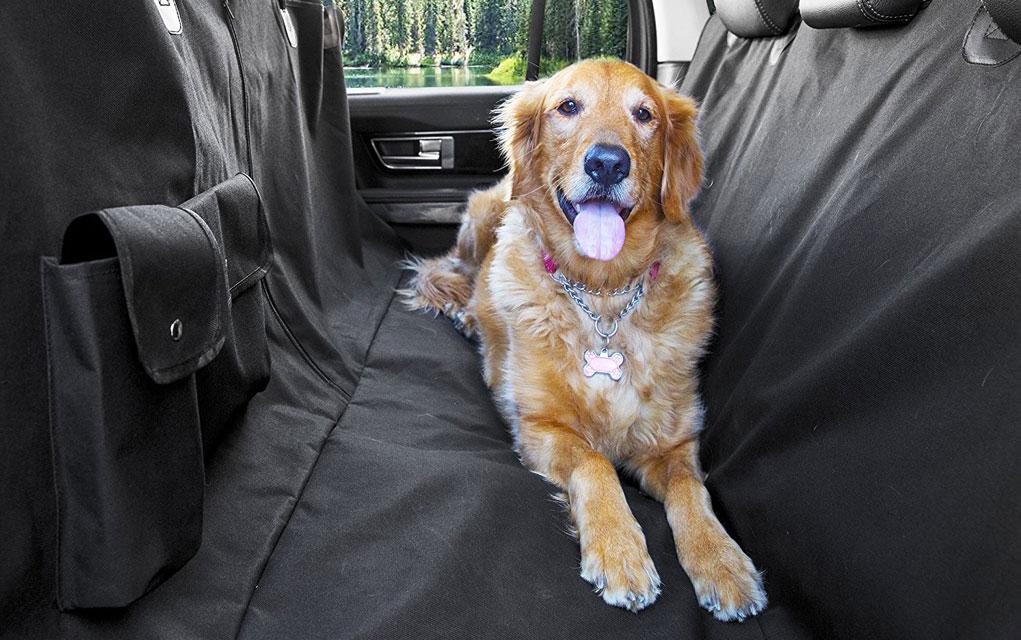 putujete sa psom petface
