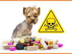 otruje sa lekovima petface