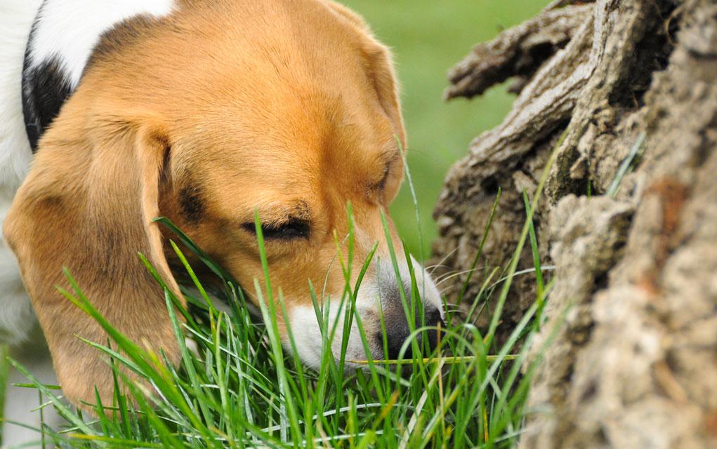 zašto-pas-jede-travu petface
