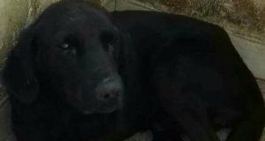 pomoc za psa petface