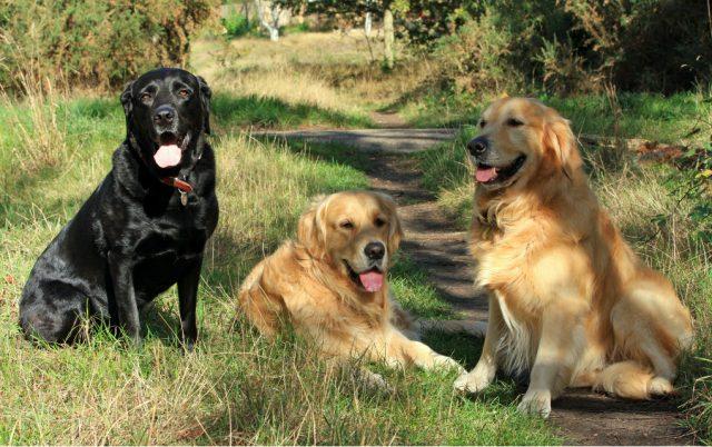 spasilacki psi petface