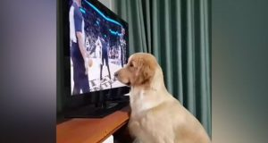 televizor petface
