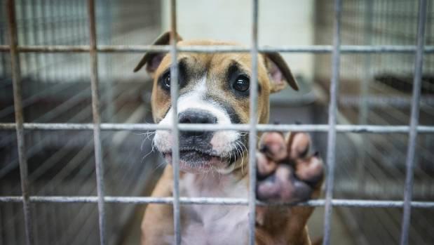 psa iz azila petface