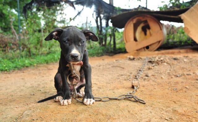 Priča jednog psa petface