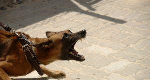 napadne pas petface