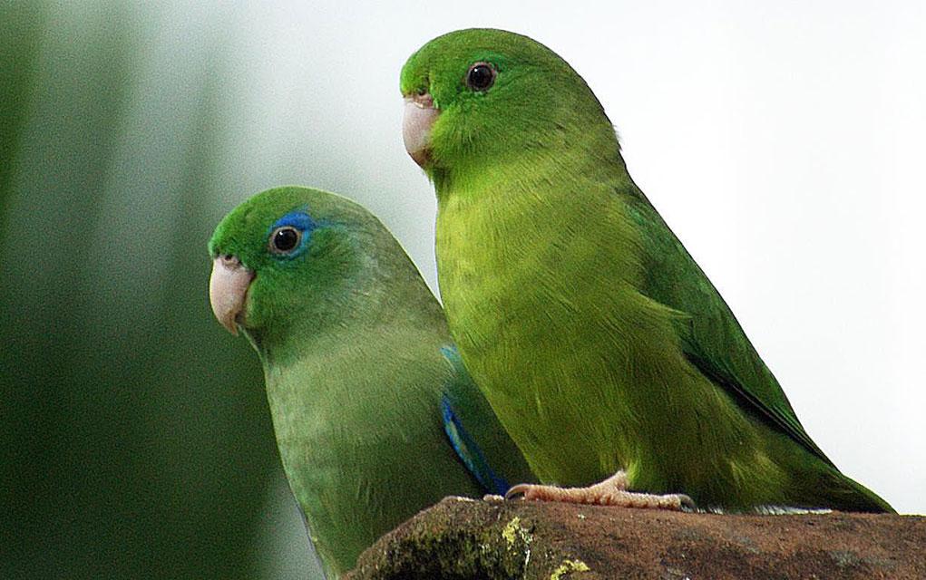 Ako želite pticu za kućnog ljubimca, saznajte koje su IDEALNE ZA STAN?