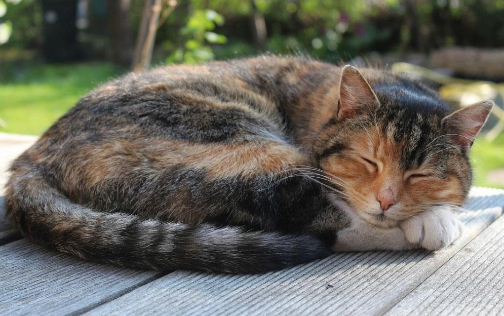 Koliko je stara mačka u ljudskim godinama IZRAČUNAJTE SAMI!