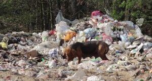 psa na deponiji petface