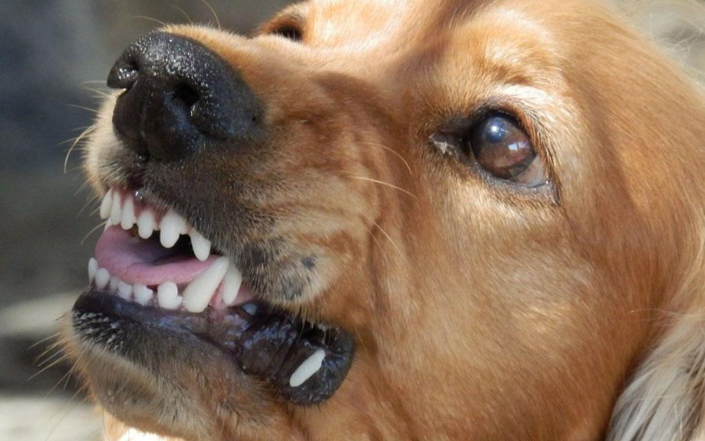 nasi psi plase petface