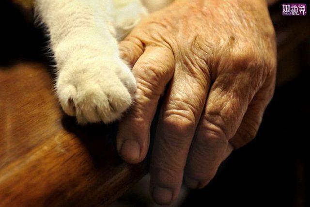 50 MILIONA DINARA ostavila mačkama petface