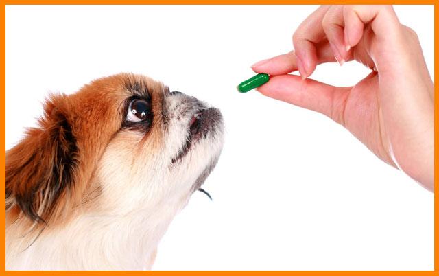 kako davati lekove ljubimcu petface