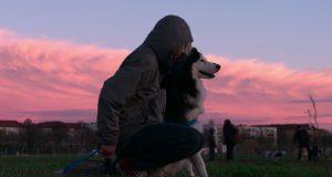 Dokumentarac o psima petface2