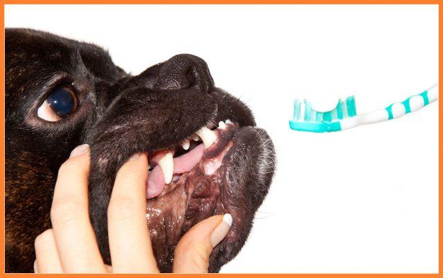 odrzavanje zdravlja zuba petface