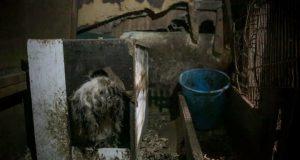 farmi za preradu pseceg mesa petface