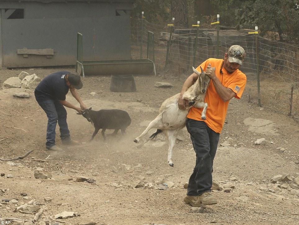 fotografije evakuacija životinja petface