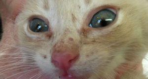 bolest koja napada macice petface