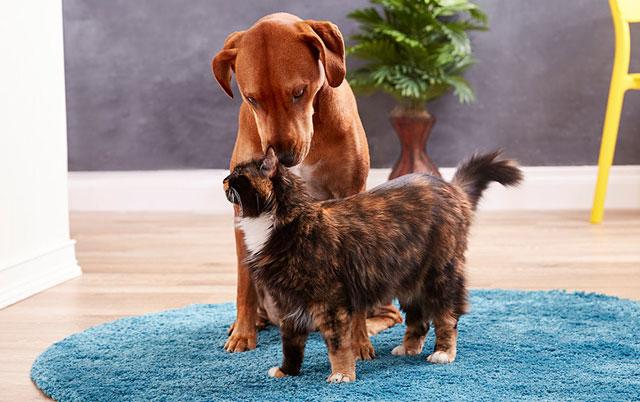psi mogu biti ljubomorni petface