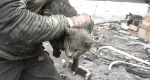 maca je zapomagala petface