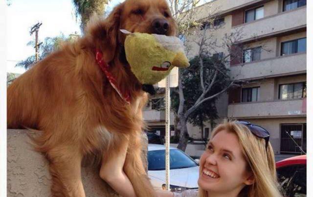 najomiljeniji pas na svetu petface