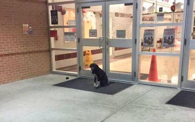 pas je cekao ispred skole petface