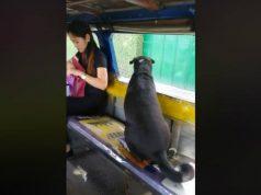 pas koji voli autobuse petface