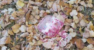 paznja otrov u parku petface