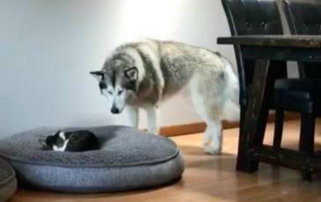 pogledajte reakciju psa petface