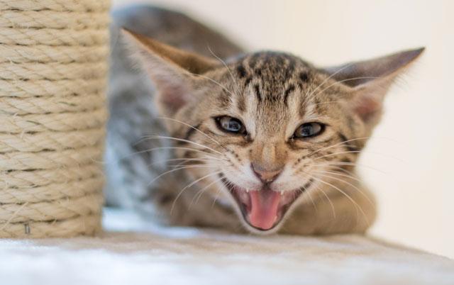 kako sanitari macje ogrebotine petface