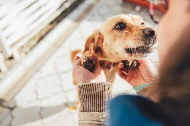 restoran daje platu za igranje sa psima petface