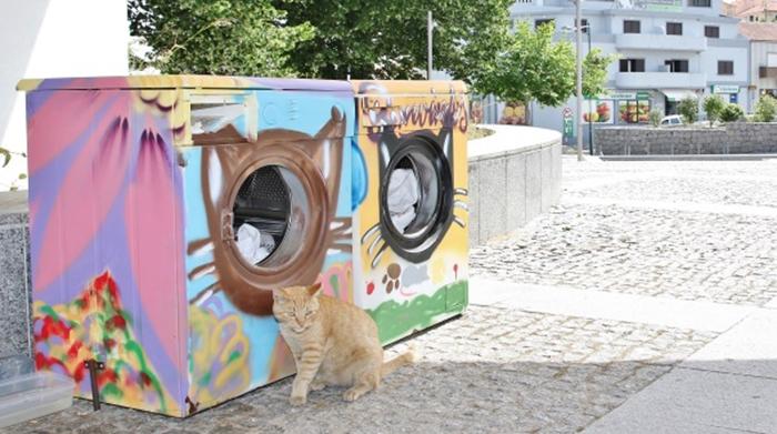 sklonište za napuštene mačke petface4