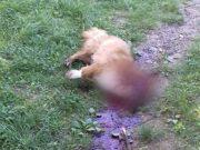 ubijanje-pasa-petface