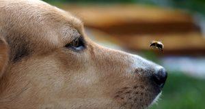 psa ujede pcela petface