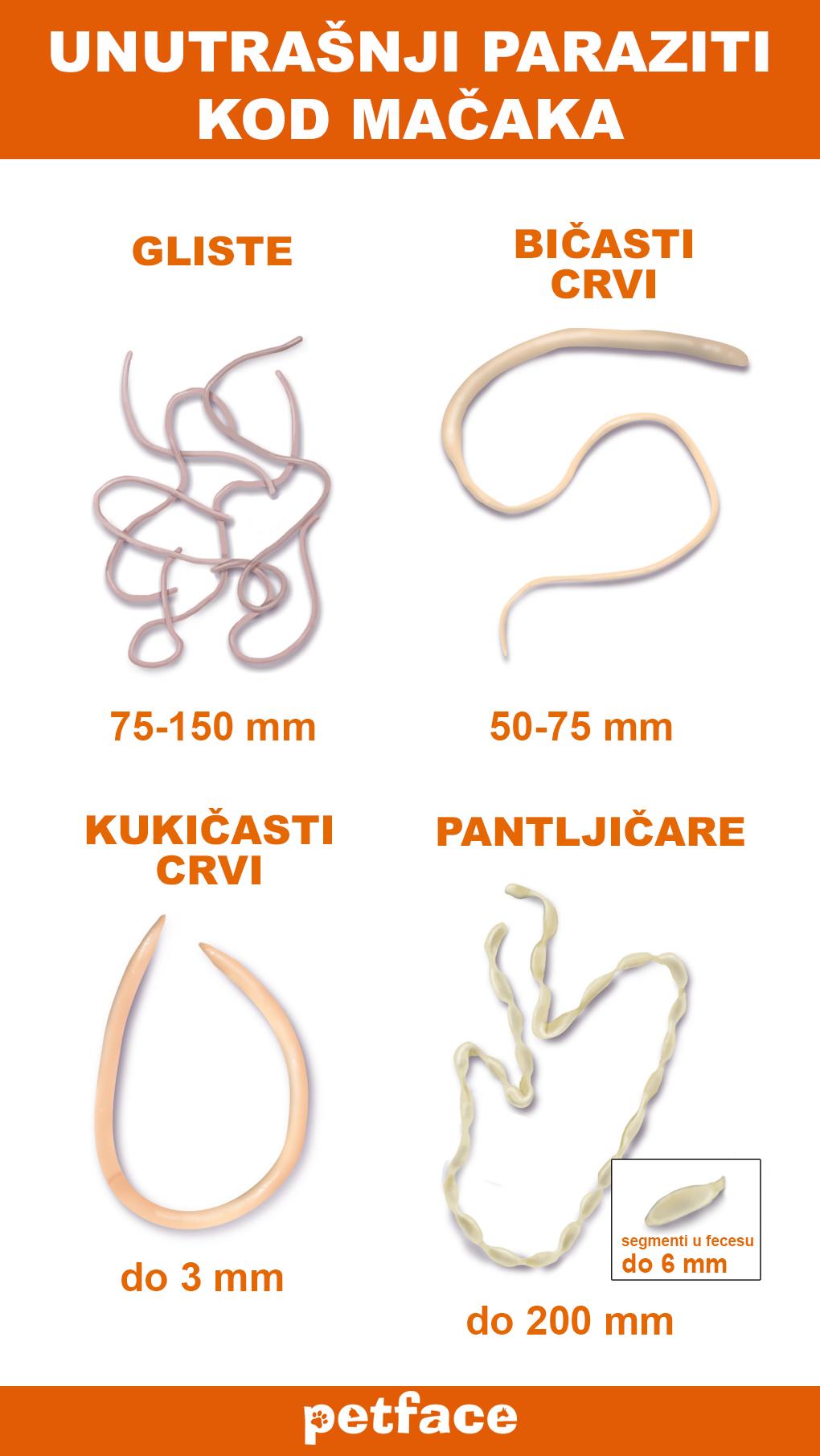 paraziti kod macaka simptomi detoxifiere breaza