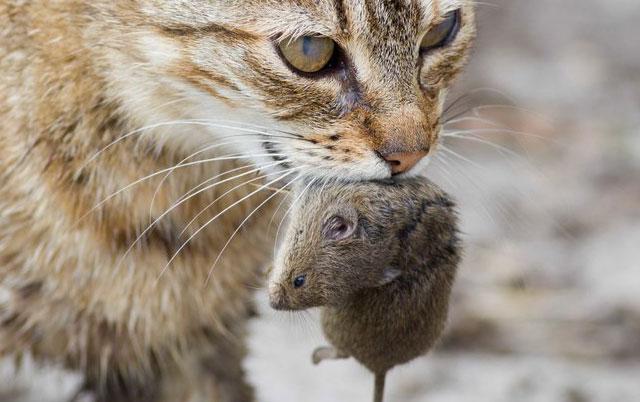 ehinokokus kod macaka petface