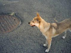 dva psa u bunaru petface