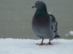 hranilicu za ptice petface