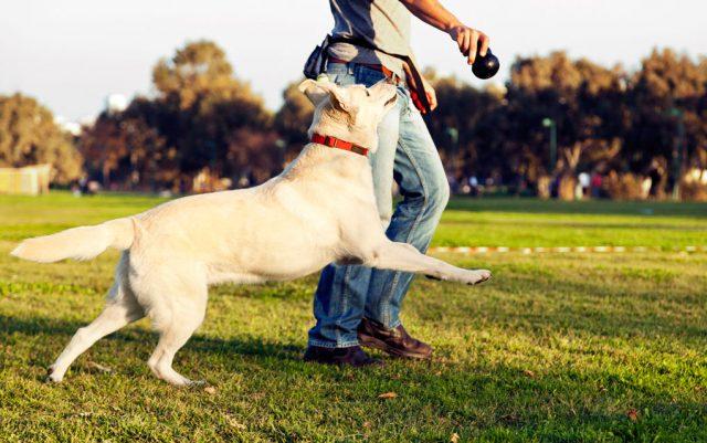 igre sa psima petface