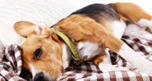 pas sa slomljenom kicmom petface