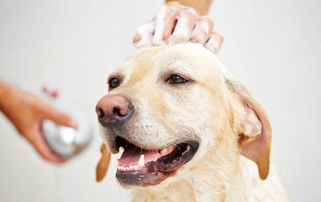 kako kupati psa petface