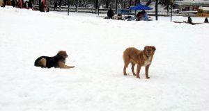 prvi put videli sneg petface