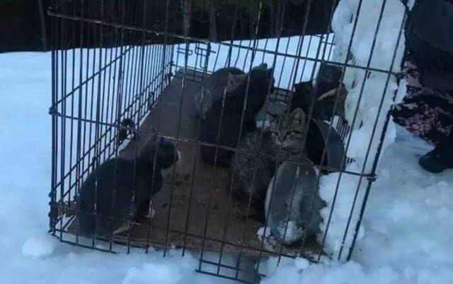 smrznutih maca u snegu petface