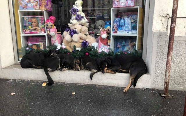 psi u zemunu petface