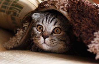 strah kod macaka petface