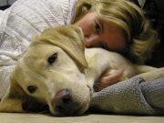 stvari koje bi ti pas rekao petface